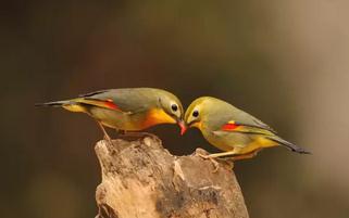 世间绝美的夫妻照,爱情太美丽!