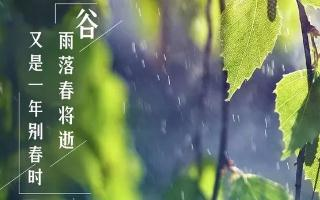 谷雨落 春将逝 又是一年别春时